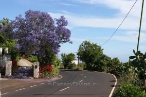 Фото острова Ла Пальма