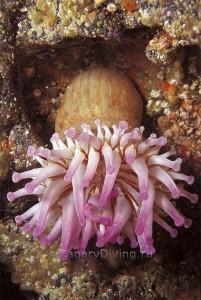 подводные фото канар