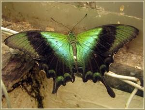 Сад бабочек Тенерифе