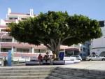 Флора Ла Пальмы